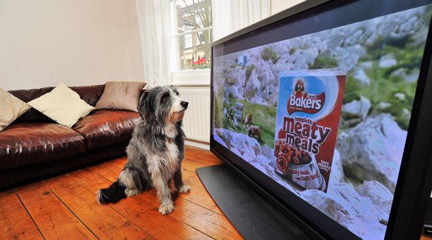 Dog food ad Baker's sounds