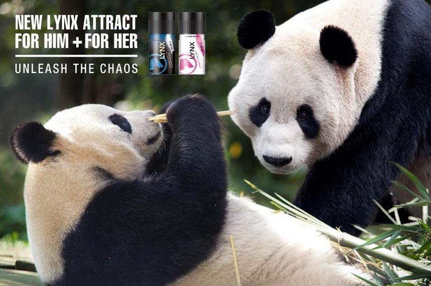 lynx sponsor edinburgh panda zoo
