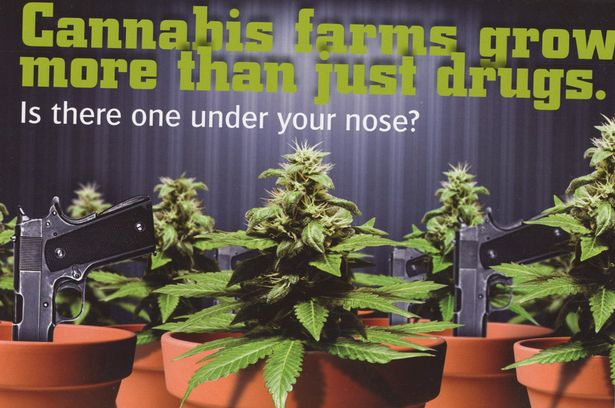 Crimestoppers 'sniff out crime' with scratch and sniff cannabis cards