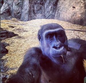 Gorilla selfie?!?!