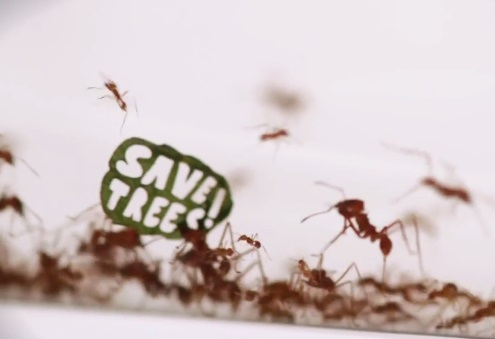 save trees wwf ant protest rally
