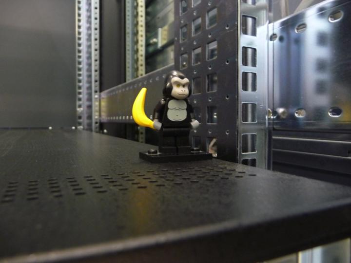 CC-Gorilla2_image