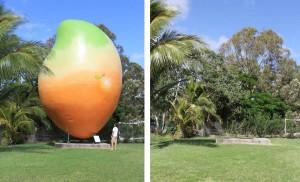 Giant mango theft is PR stunt… probably