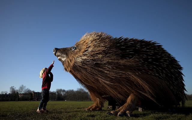 hedgehog natural curiosities