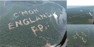 PP Rainforest