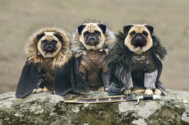 Pugs of Westeros Game of Thrones PR stunt