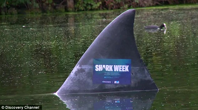 Fins-bury Park punters given fright with shark fin boating lake prank