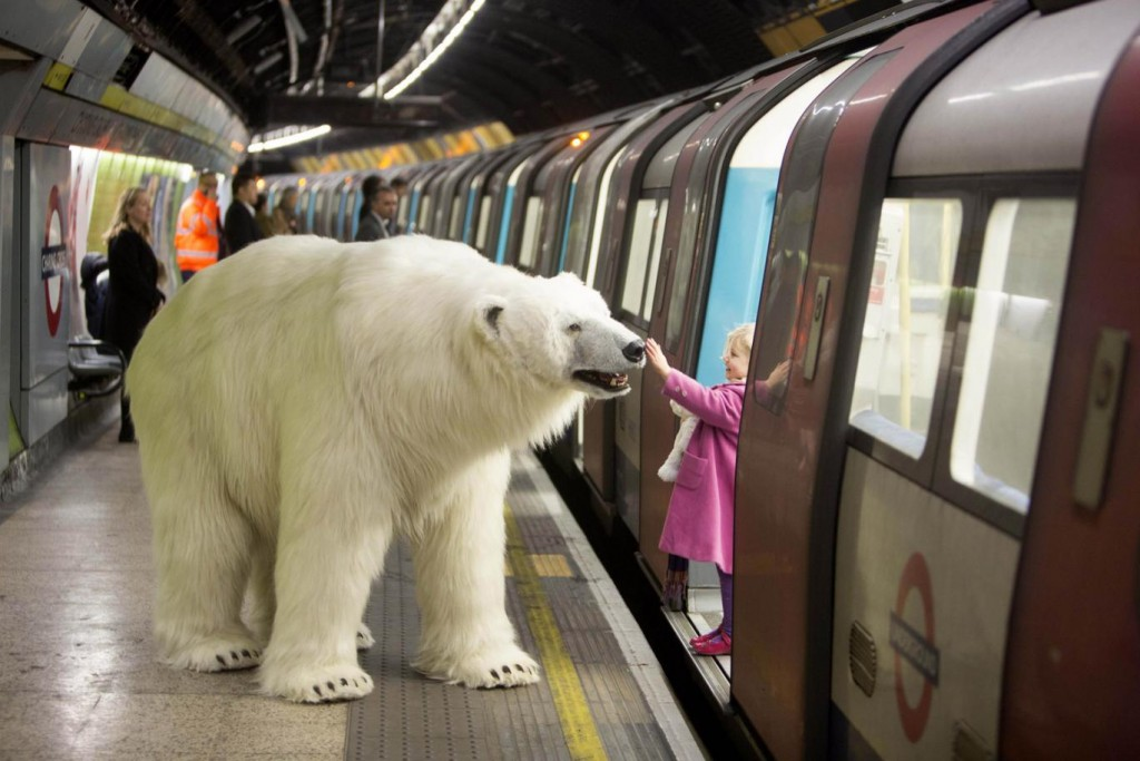 Full sized polar bear spotted on the tube
