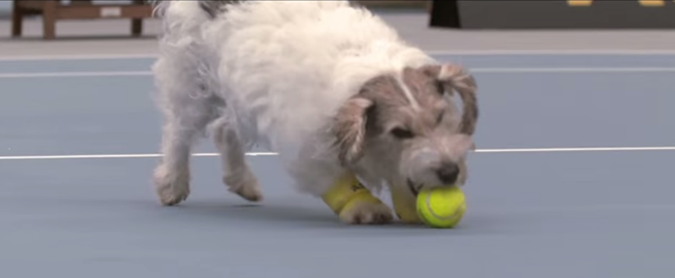 Keeping those post #Wimbledon blues at bay with a new spin on the game 'fetch'